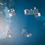 Innovative Tech is Musselling in on Aquaculture