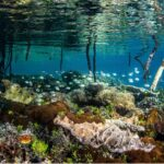 BE Pulse #5: Mapping and measuring ocean wealth