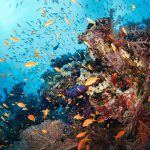 Coral mapping technology to accelerate reef restoration